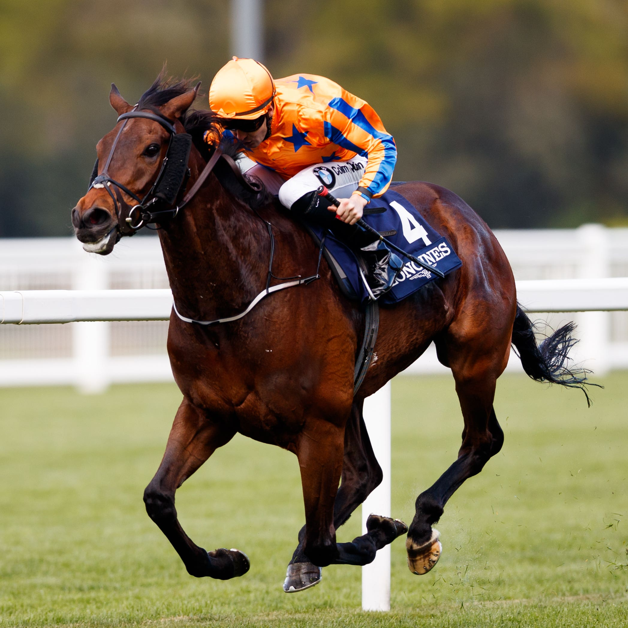 Torcedor on his way to winning the Sagaro Stakes at Ascot