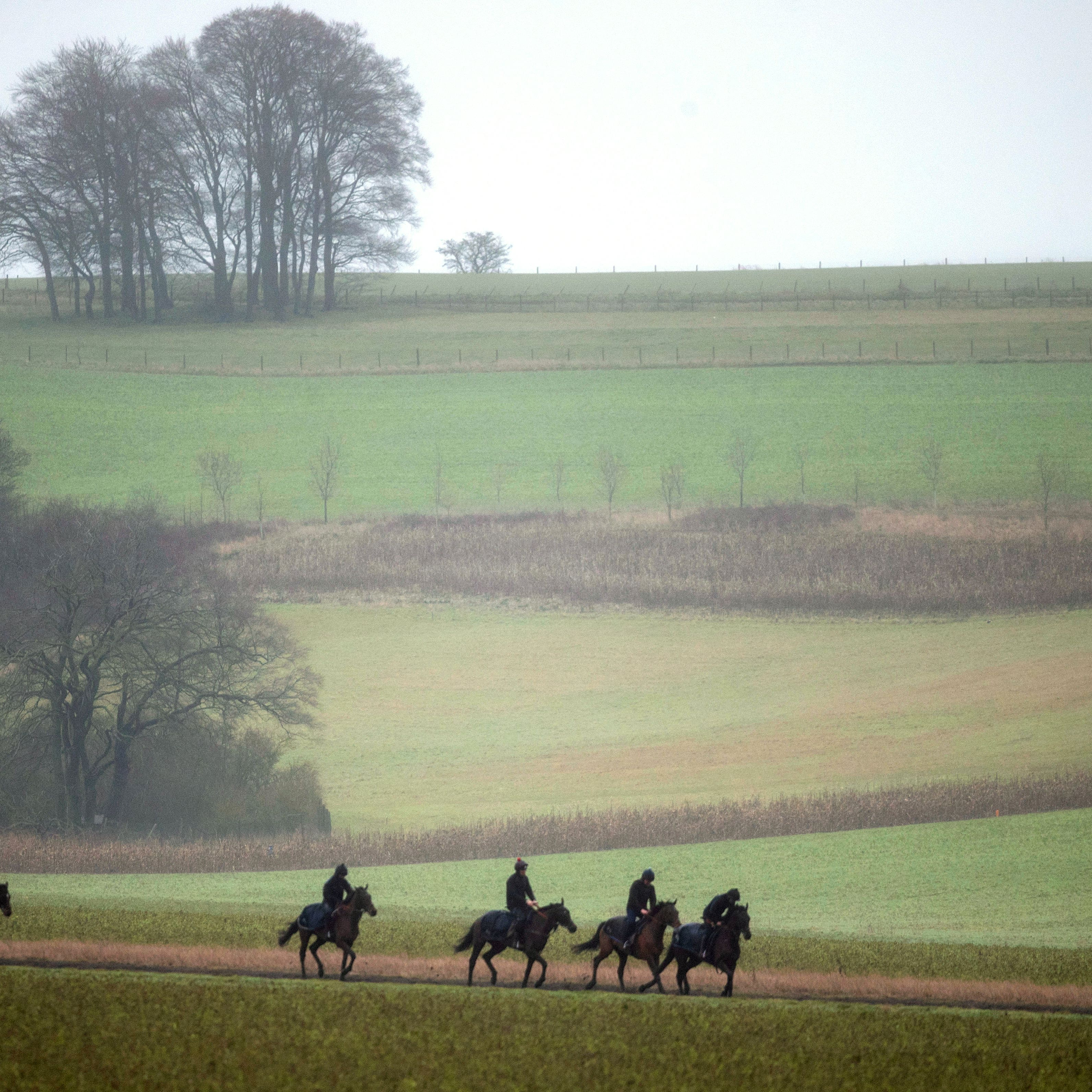 Horses return after being exercised on the gallops at Lambourn