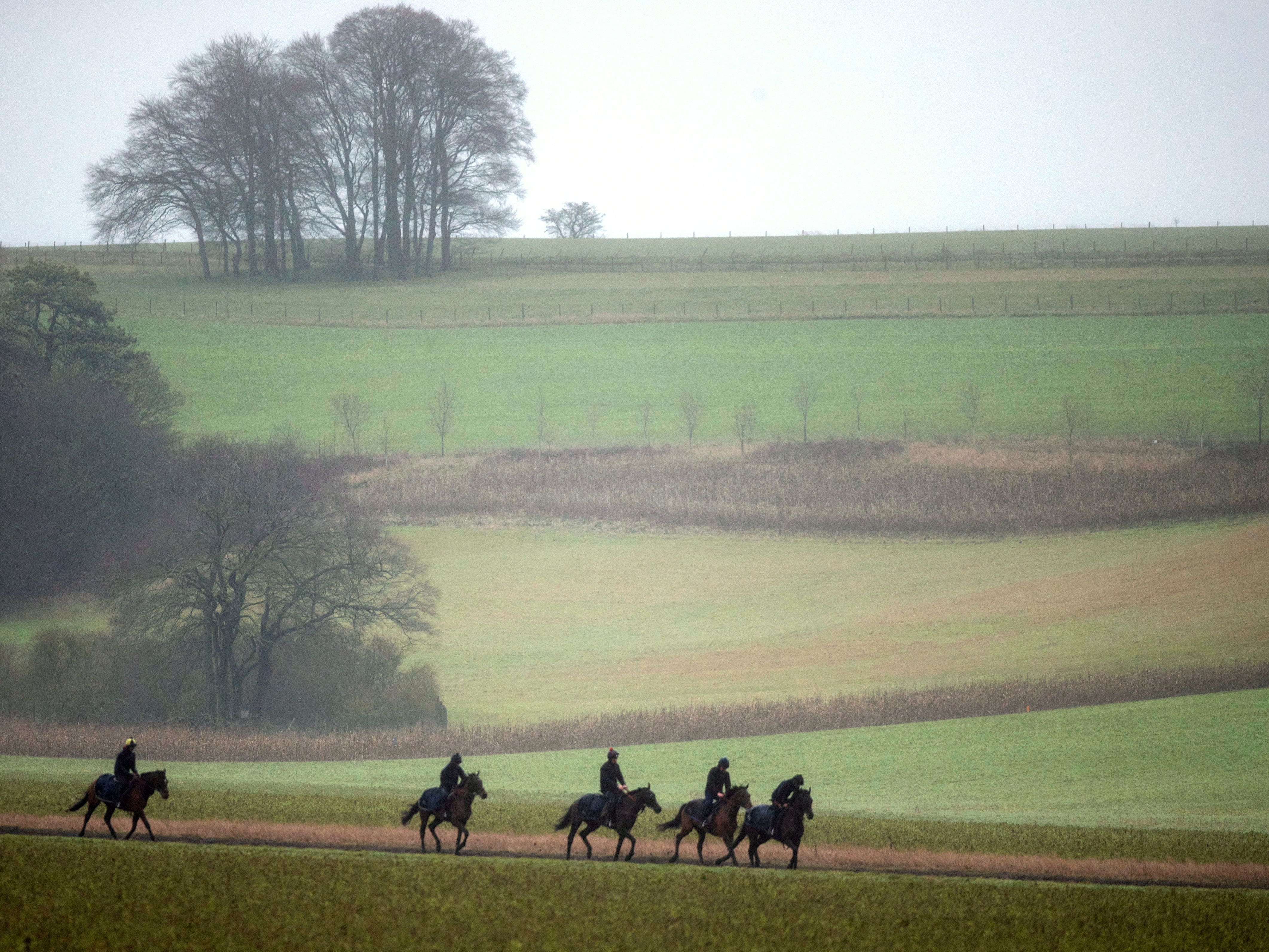 Horses return after being exercised on the gallops at Lambourn (Steve Parsons/PA)