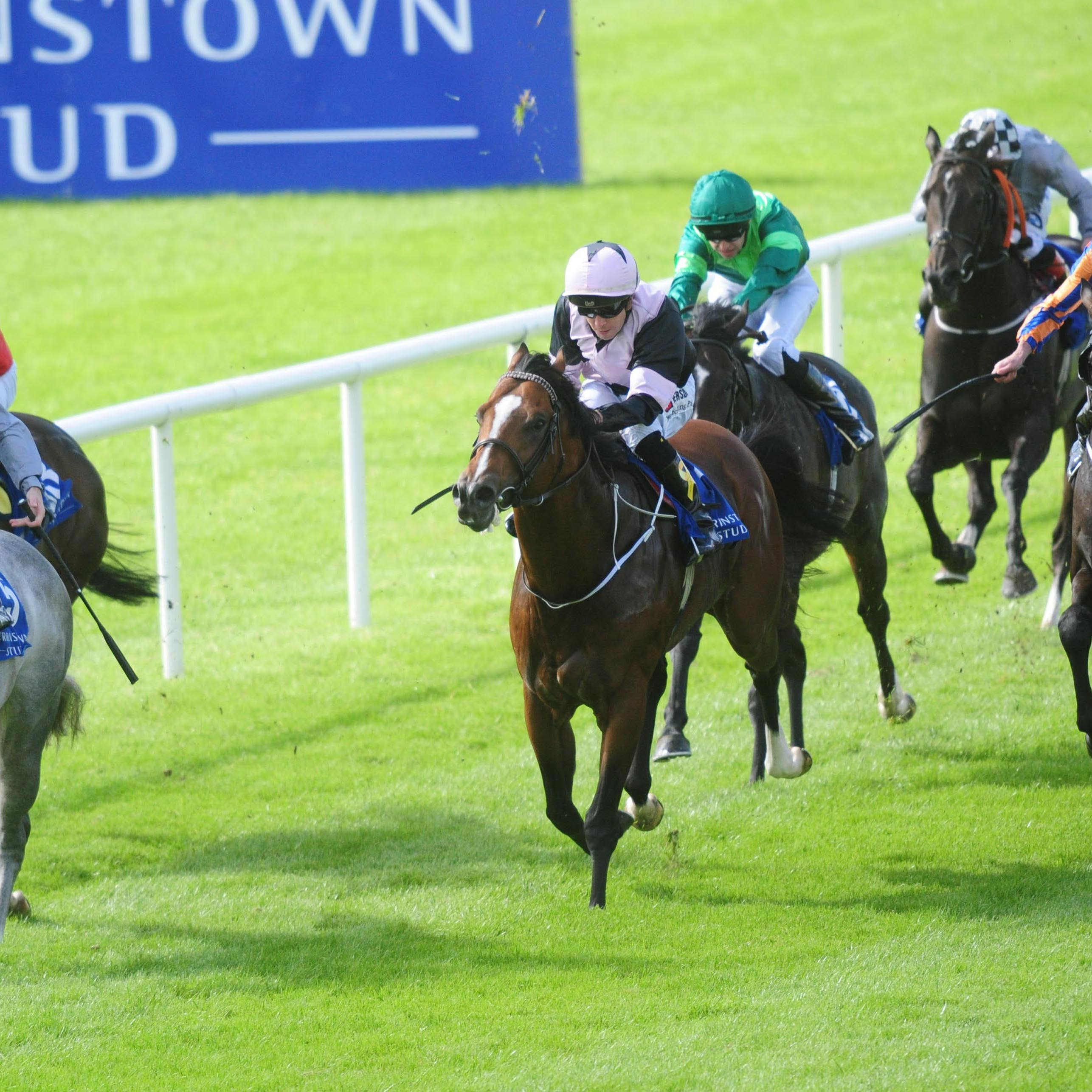 Hit The Bid found the ground too soft at the Curragh