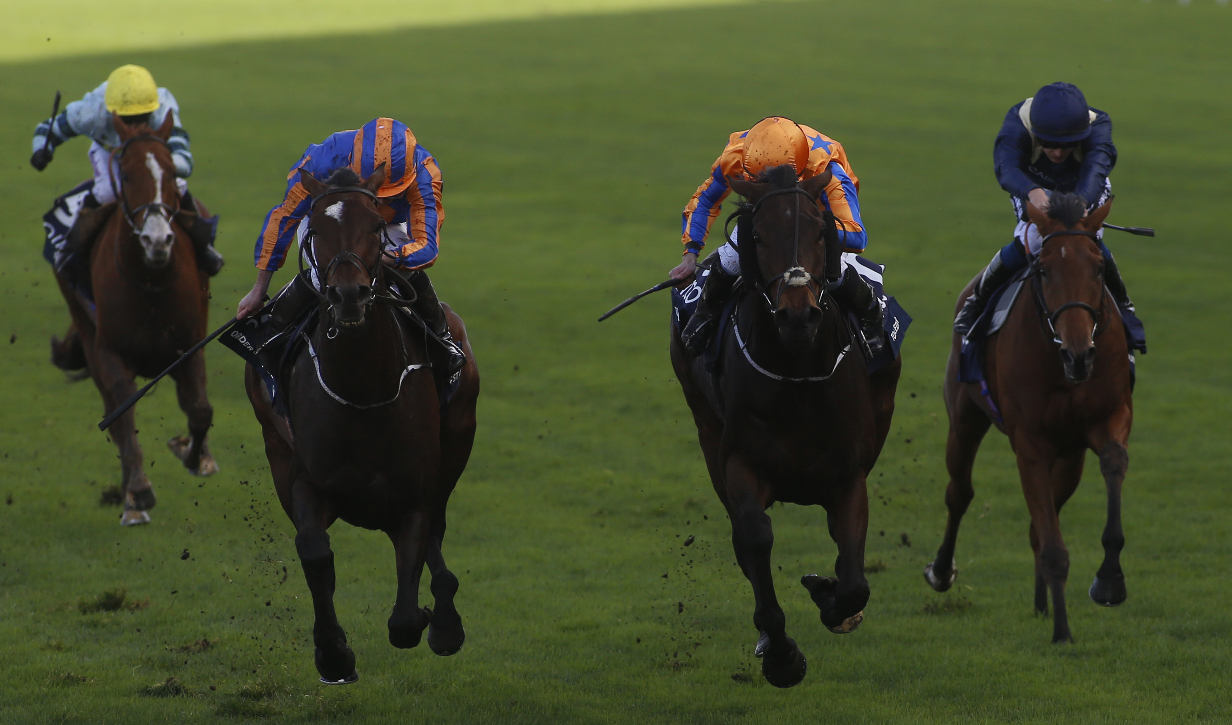 Order of St George (left) narrowly beats Torcedor (centre) on Champions Day at Ascot last season