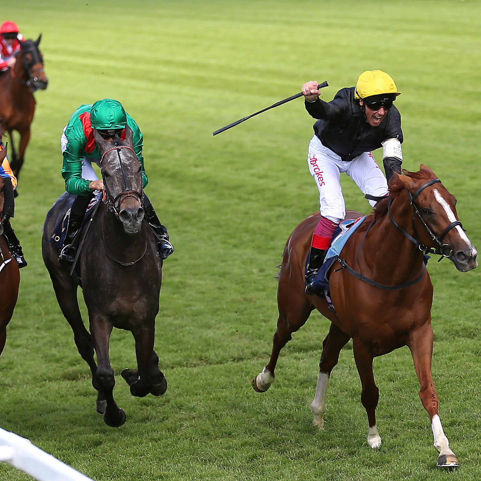 Stradivarius was a game winner of the Gold Cup last year
