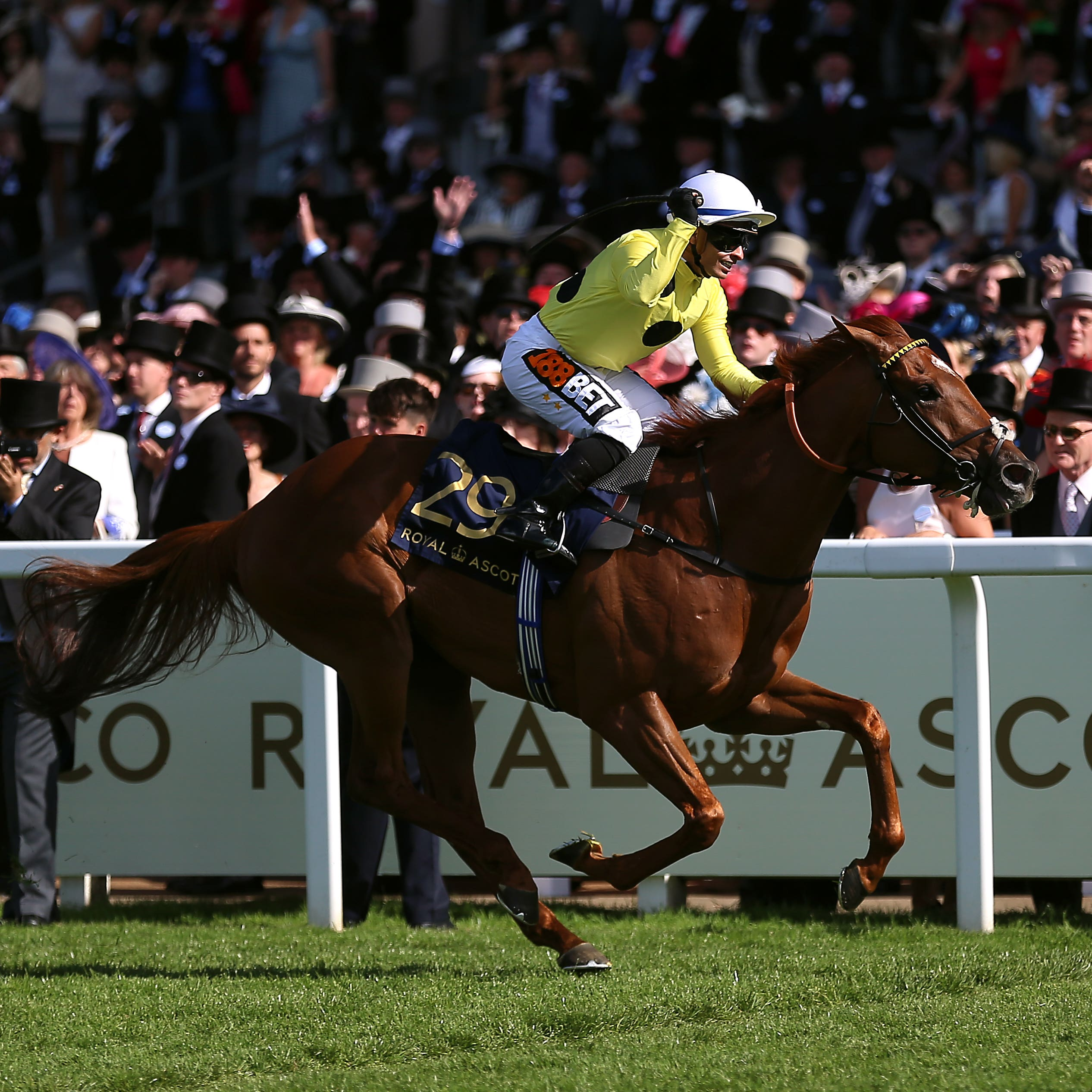 Ostilio spreadeagled the field at Royal Ascot