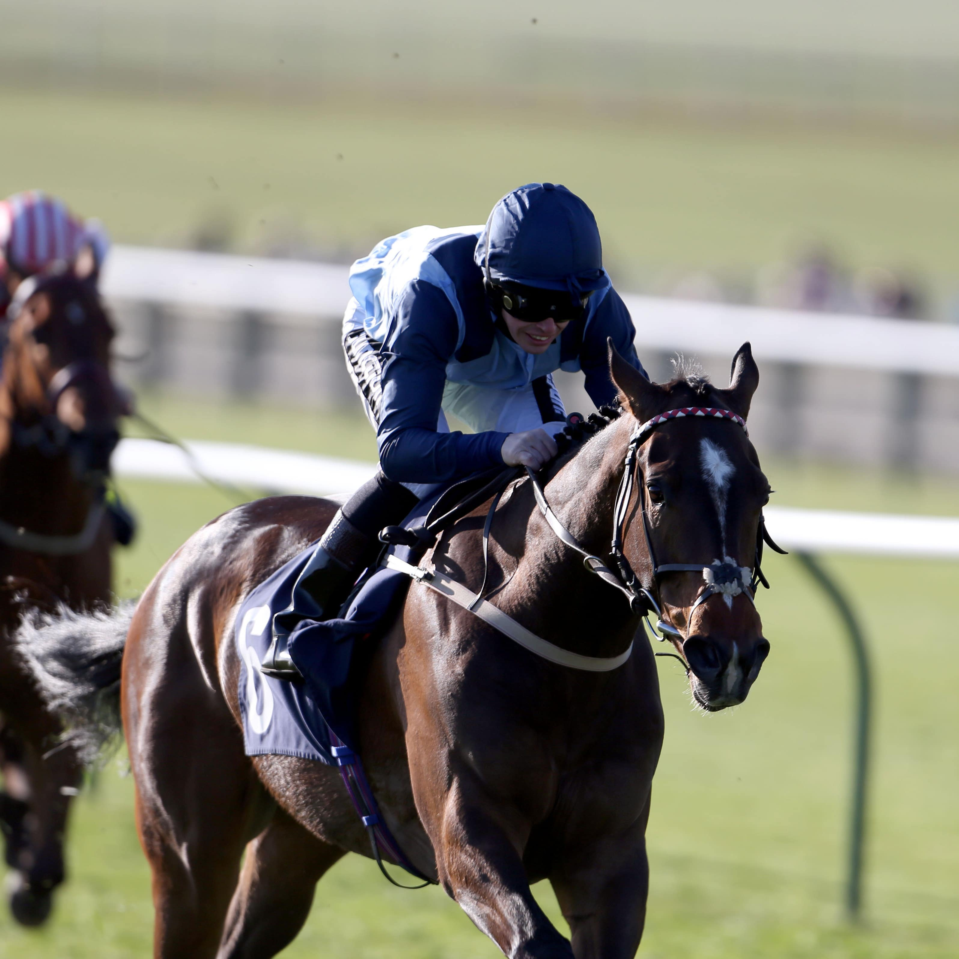 Danzeno could bypass an outing in the Wokingham at Royal Ascot
