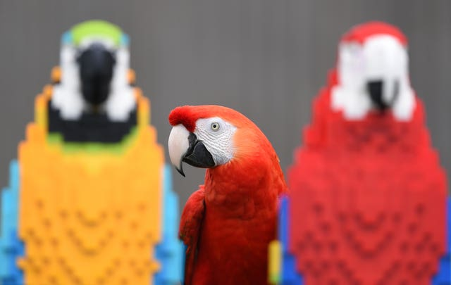 A Lego macaw sculpture