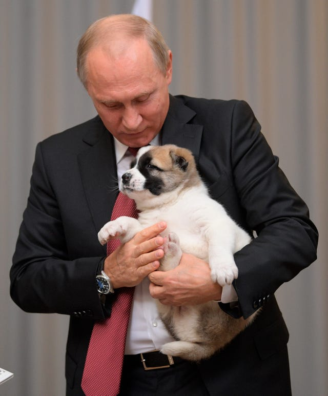 Vladimir Putin was given a puppy as a birthday gift and it ...