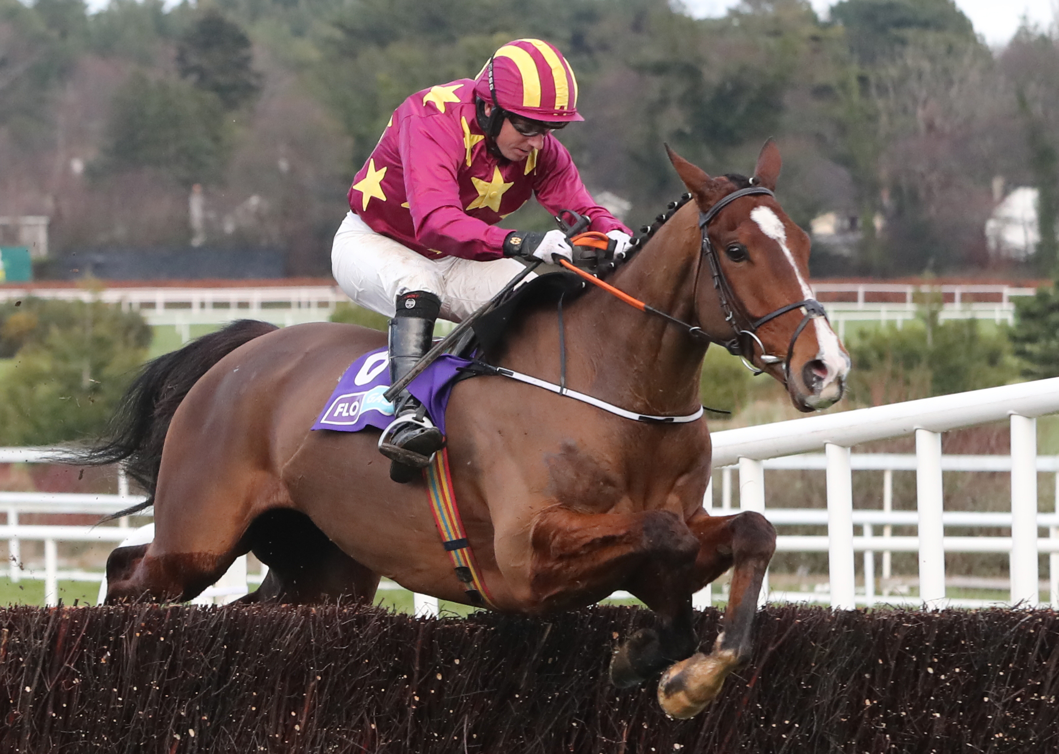 Monalee is another major contender in a high-class renewal of the Clonmel Oil Chase