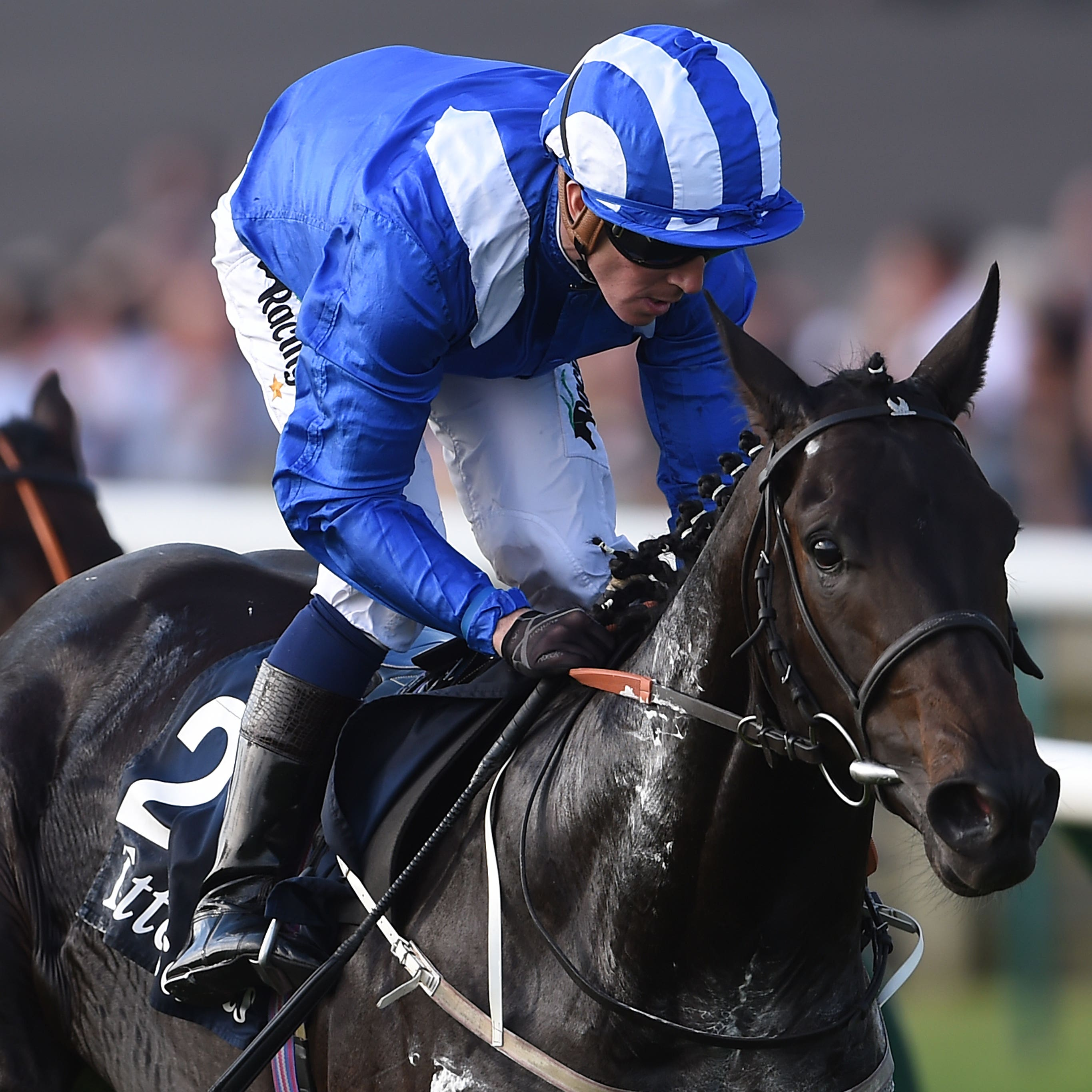 Elarqam was disappointing in the Irish Guineas