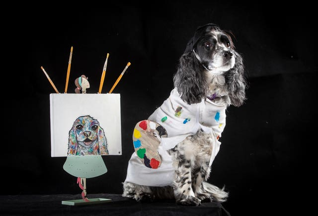 Rosie the cocker spaniel dog dressed as Pablo Picasso