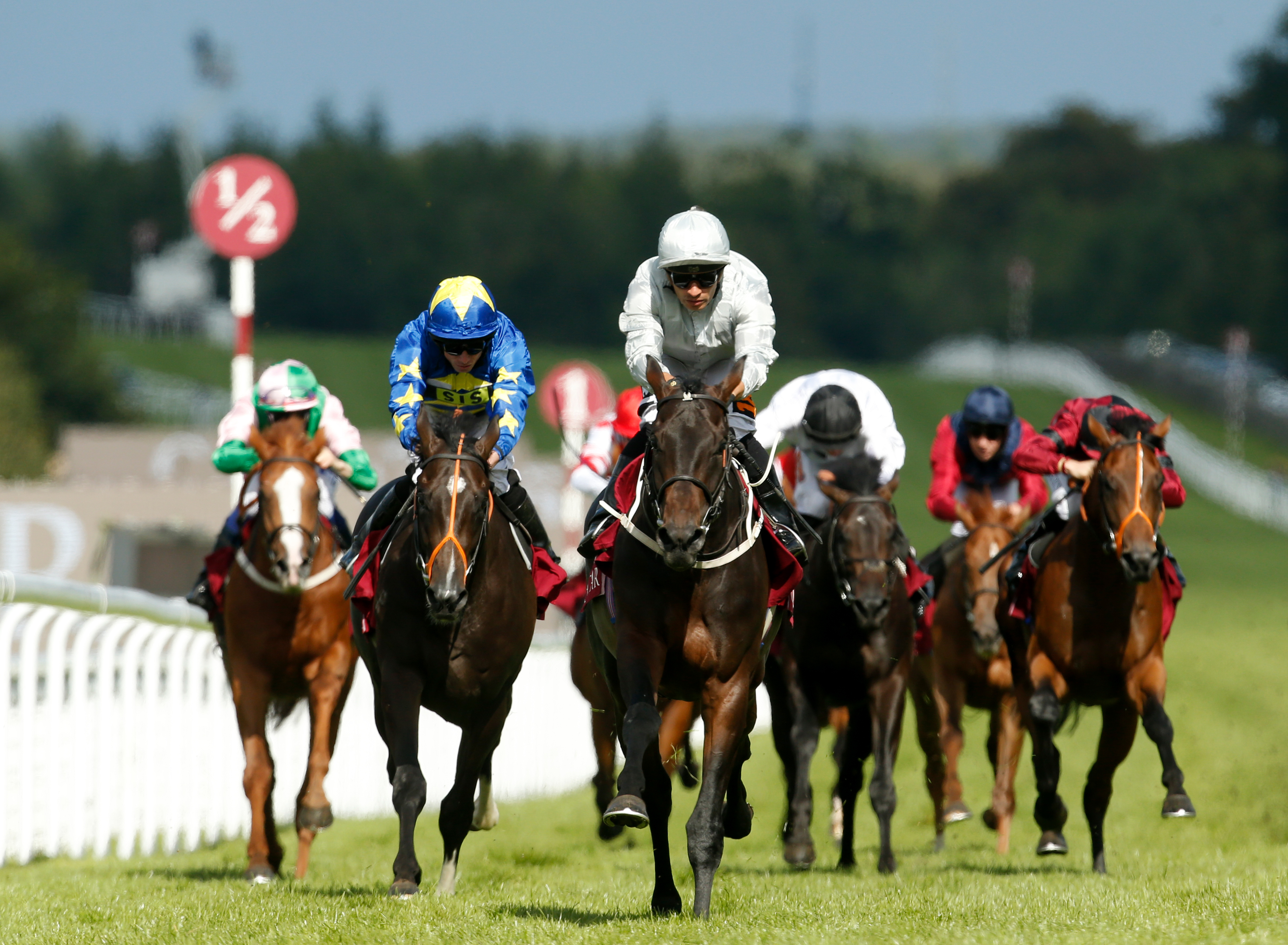 Dee Ex Bee, seen winning at Goodwood last year, is the north's main hope
