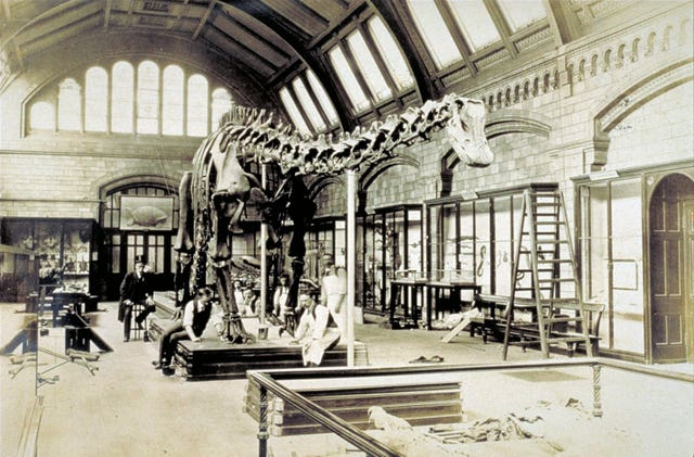 Dippy the Diplodocus in the central hall at the Natural History Museum in 1905 (PA Wire / Natural History Museum)