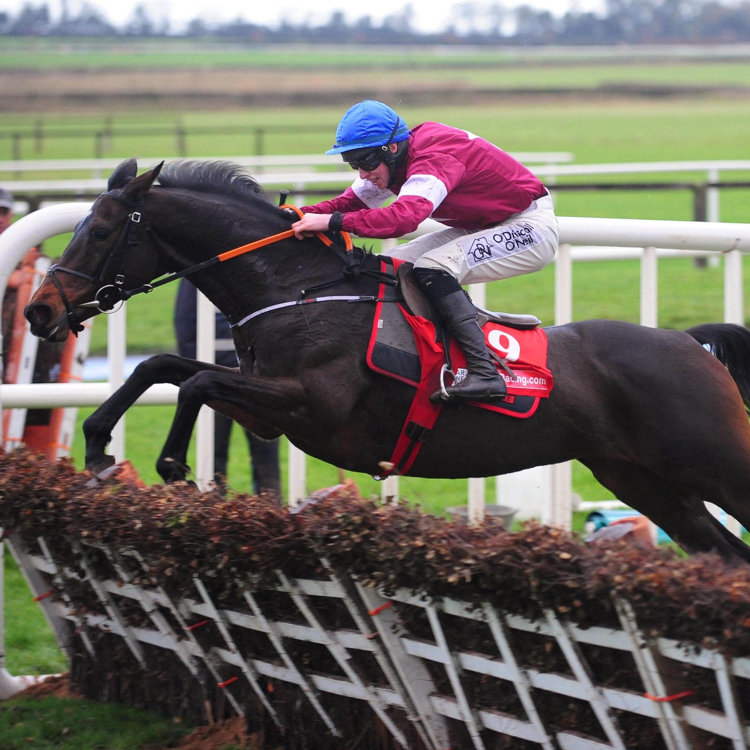 Apple's Jade jumps the final flight on her way to winning a third Hatton's Grace Hurdle at Fairyhouse