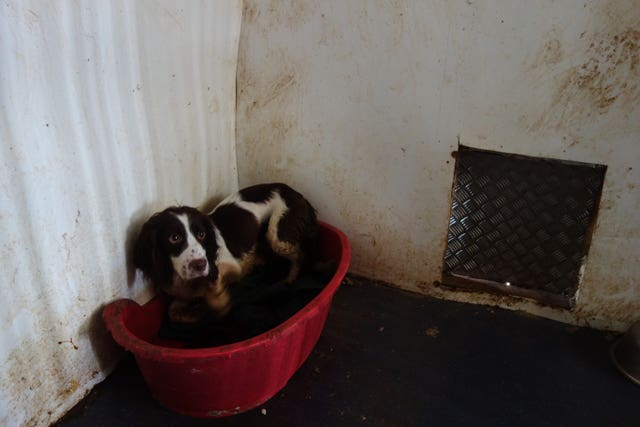 Puppy farmers jailed