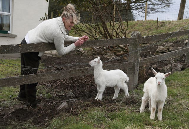 Angela Bermingham said Daisy took a shine to a ram (Brian Lawless/PA)