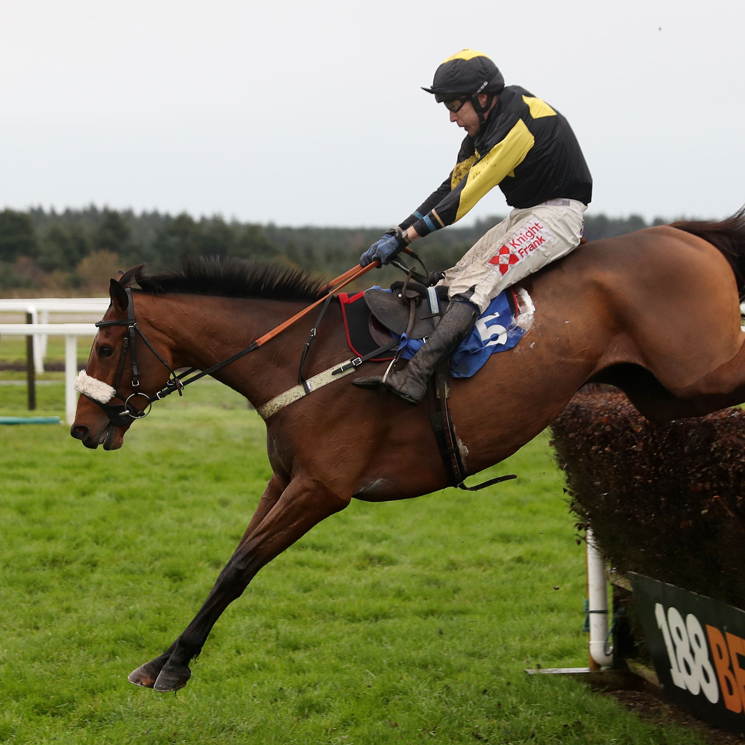 Elegant Escape, seen winning at Exeter