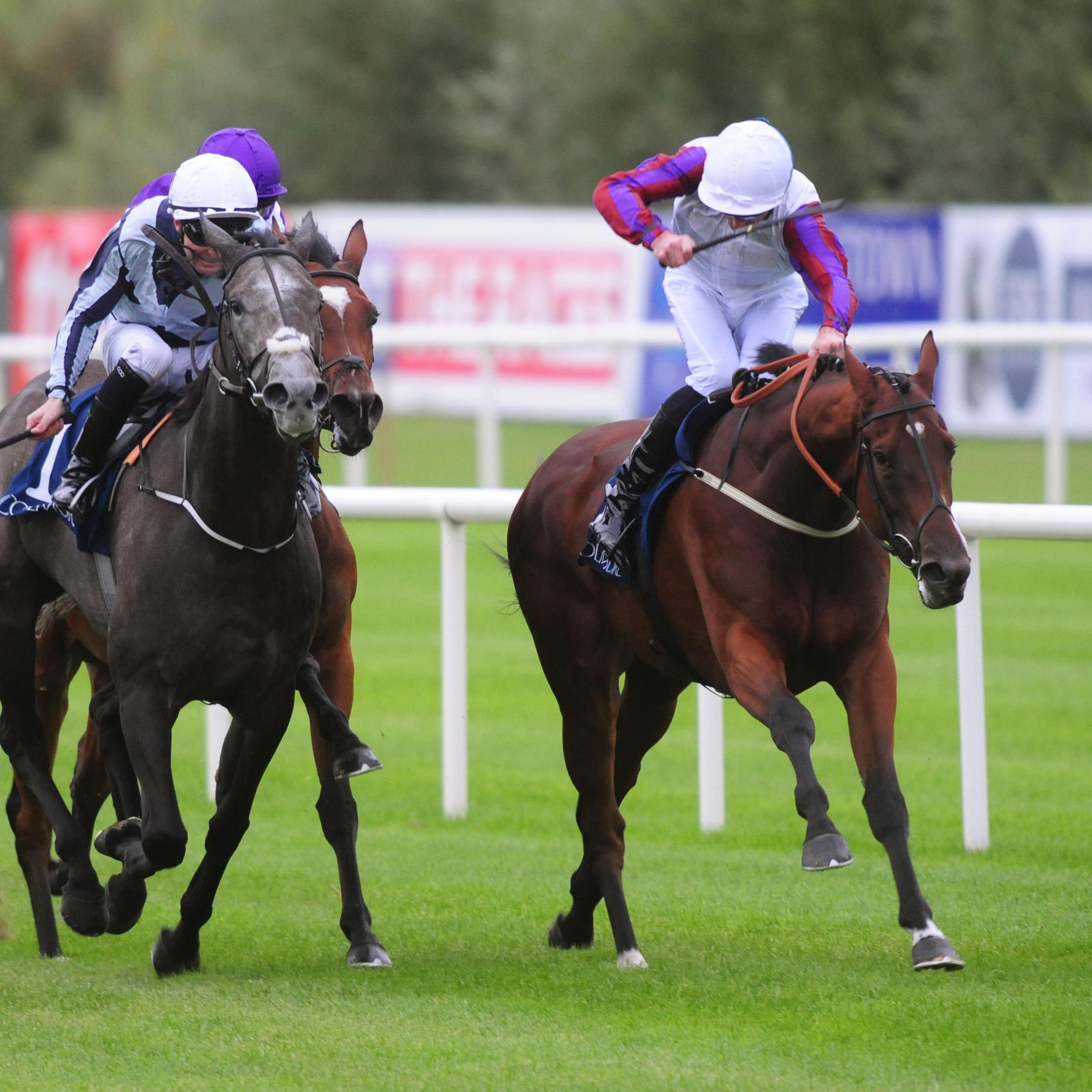 Laurens sticks her head down to bravely see off Alpha Centauri at Leopardstown
