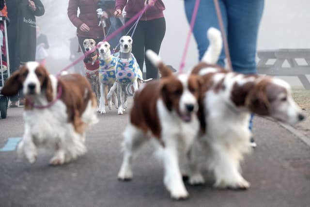 Dog Grooming Vacancies Birmingham