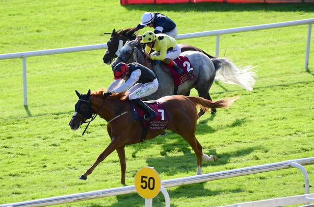 Search For A Song takes on Stradivarius after winning the Irish St Leger for the second successive year