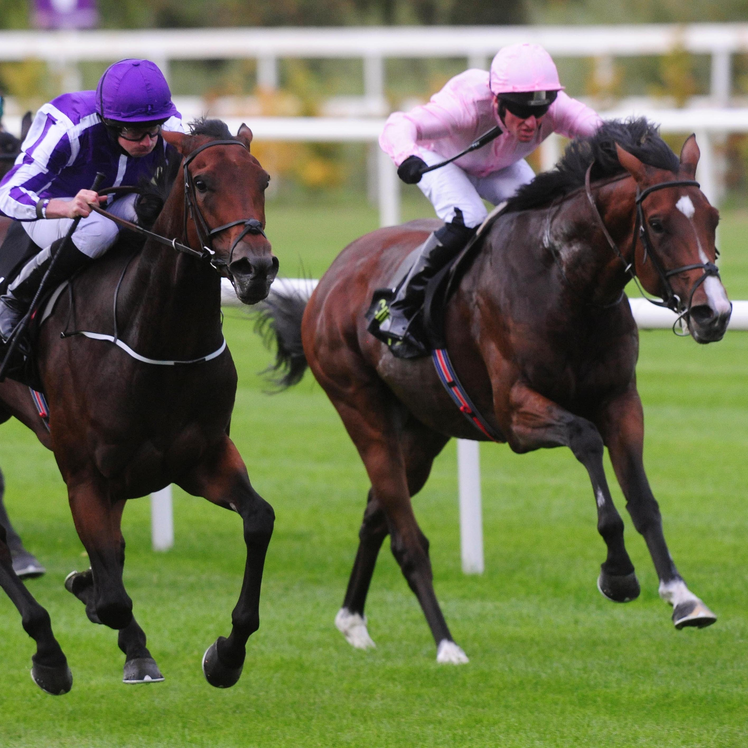 Kenya (right) finishes second to stablemate I Can Fly at Leopardstown