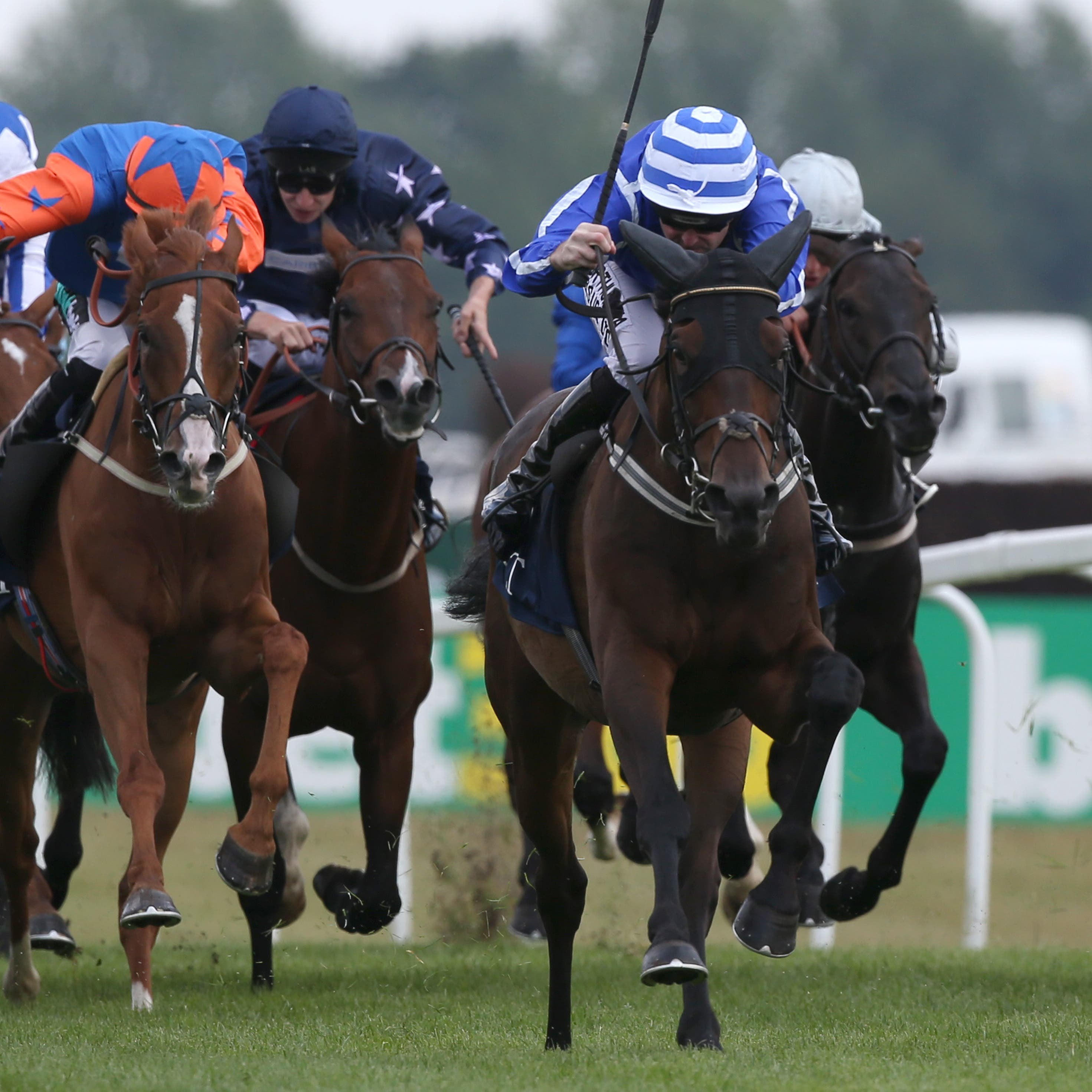 Stratum heads a team of seven in the Cesarewitch for Willie Mullins