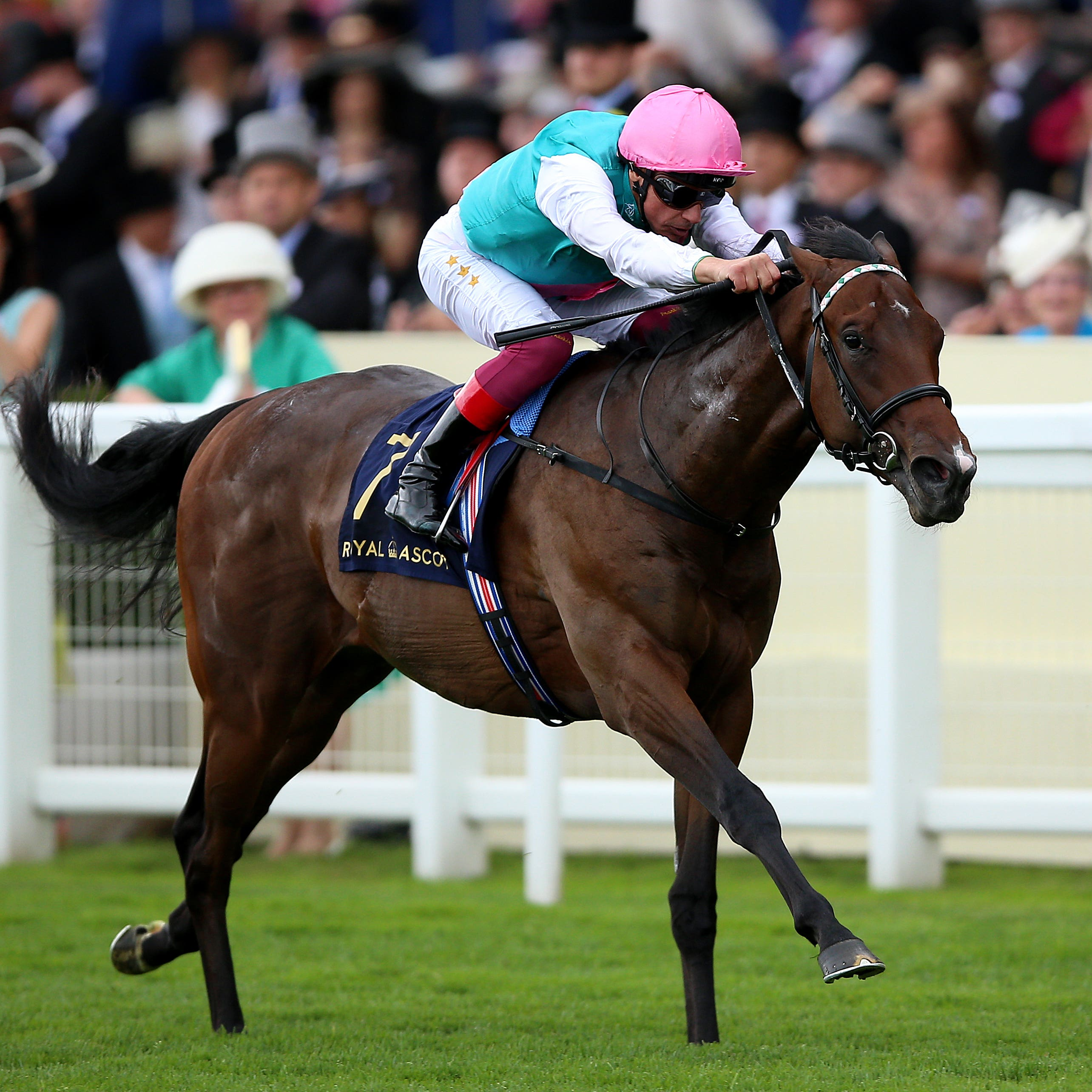 Calyx on his way to winning the Coventry Stakes at Royal Ascot