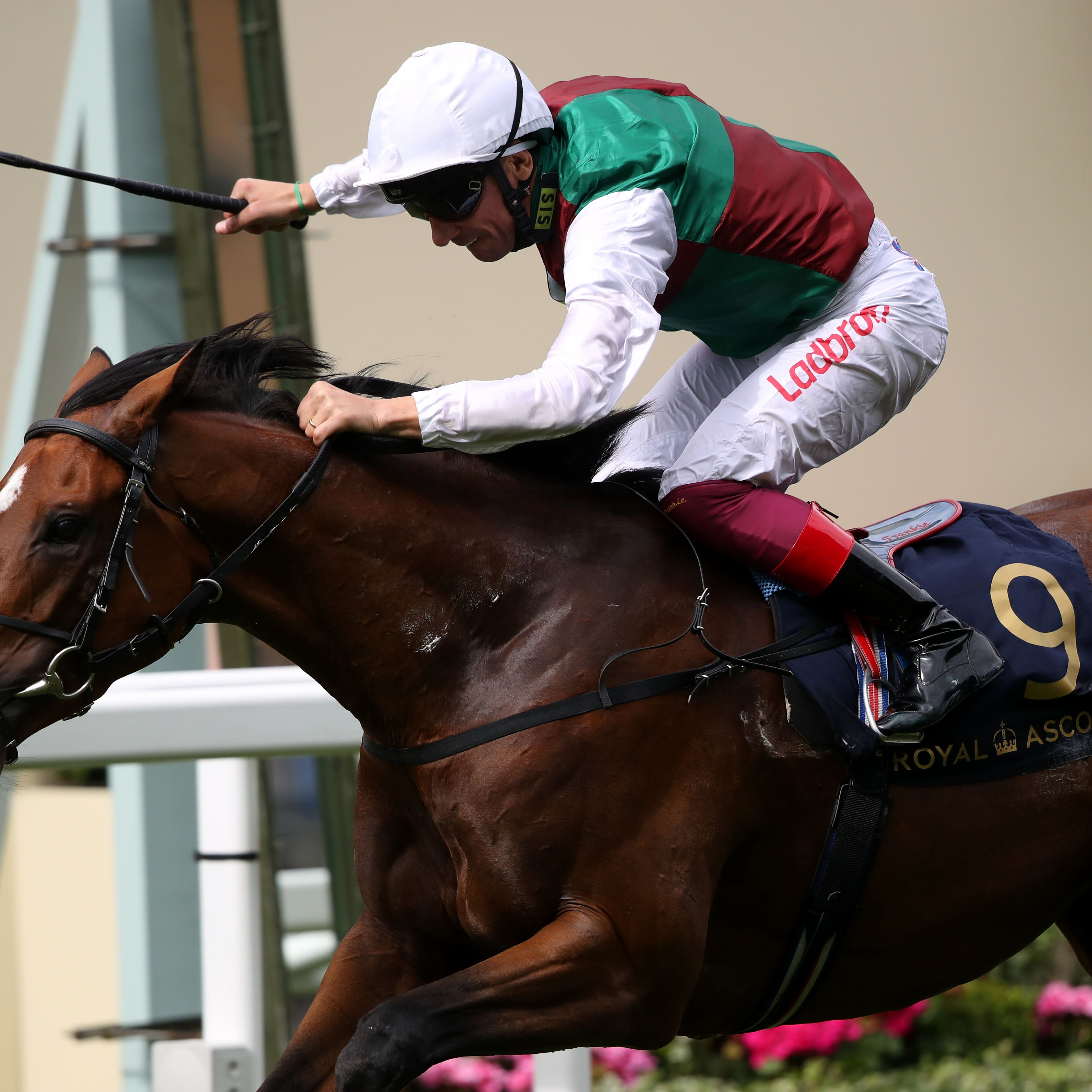Without Parole starred in the St James's Palace Stakes