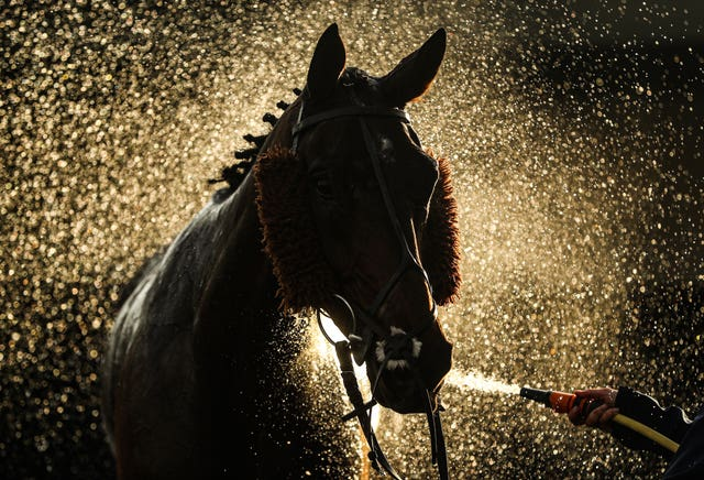 A horse is hosed down at Warwick Racecourse in early November. The racing calendar also suffered severe disruption during an unprecedented year for sport