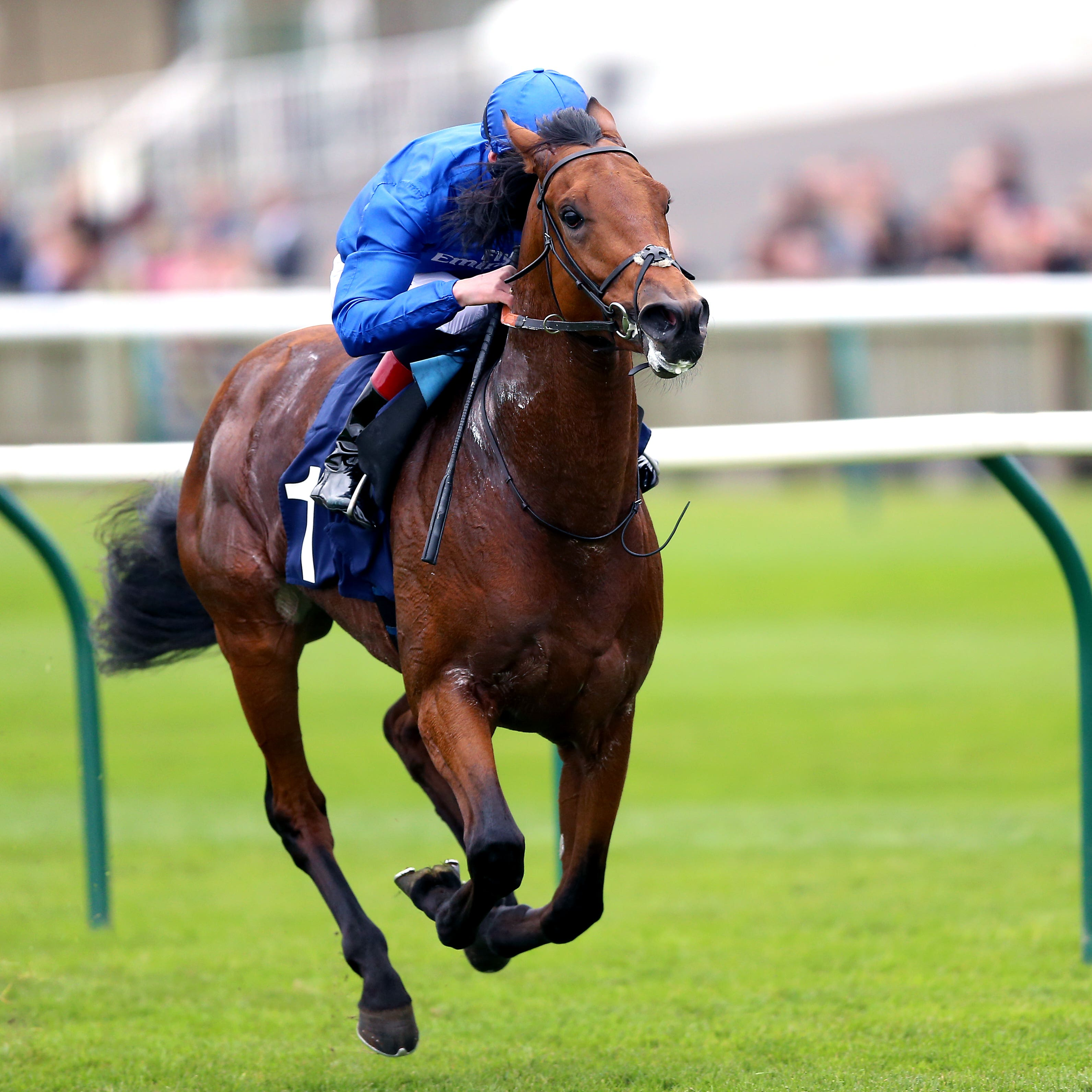 Old Persian has plenty of good form at Newmarket (Nigel French/PA)