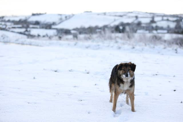Dogs should be kept away from frozen ponds and lakes, experts say (Brian Lawless/PA)