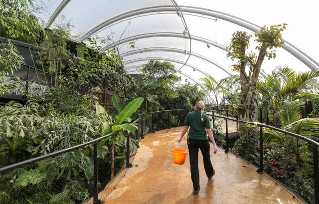 A Marwell Zoo employee makes their way around the new Tropical House (Andrew Matthews/PA)