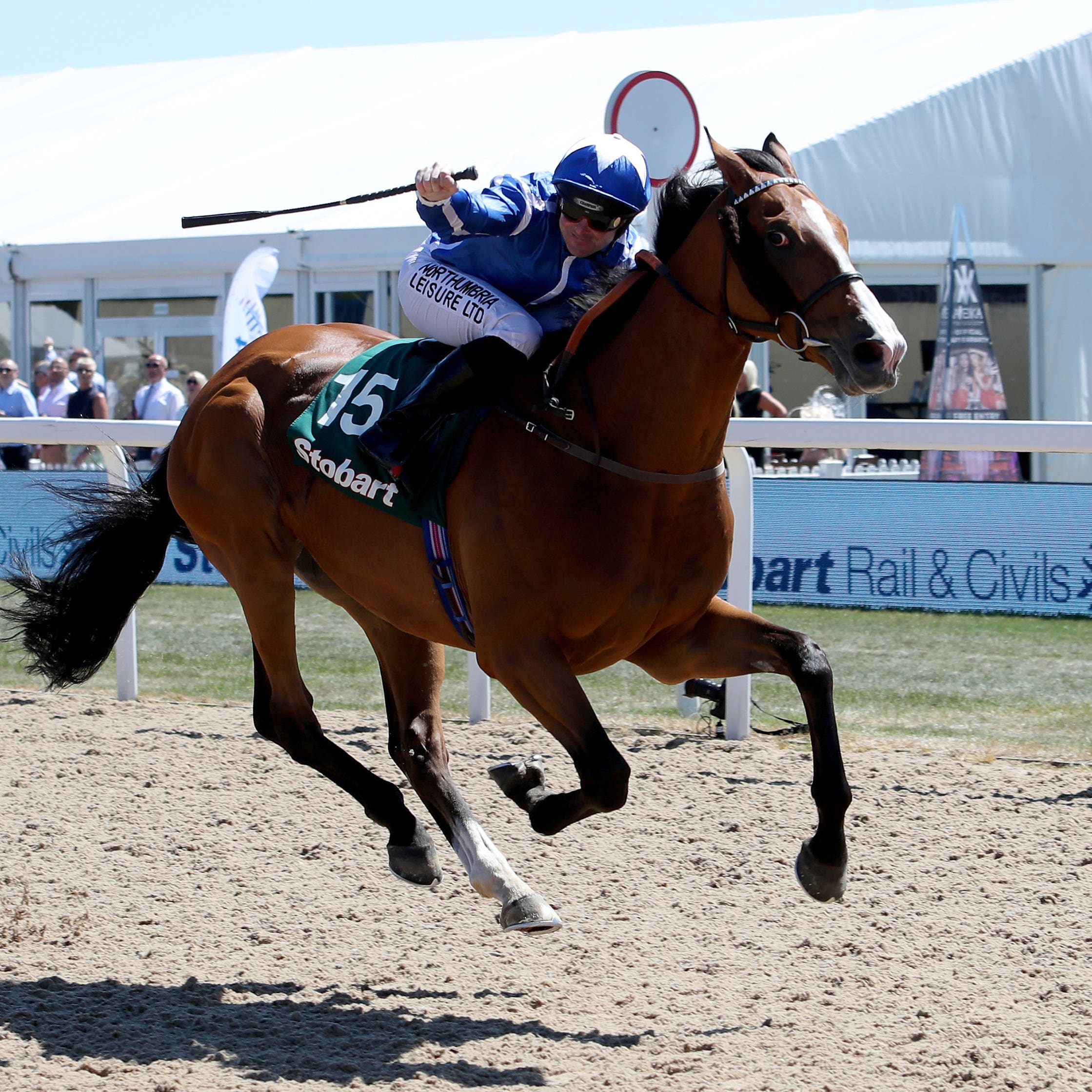 Withhold could try to defend his Northumberland Plate crown at Newcastle on Saturday