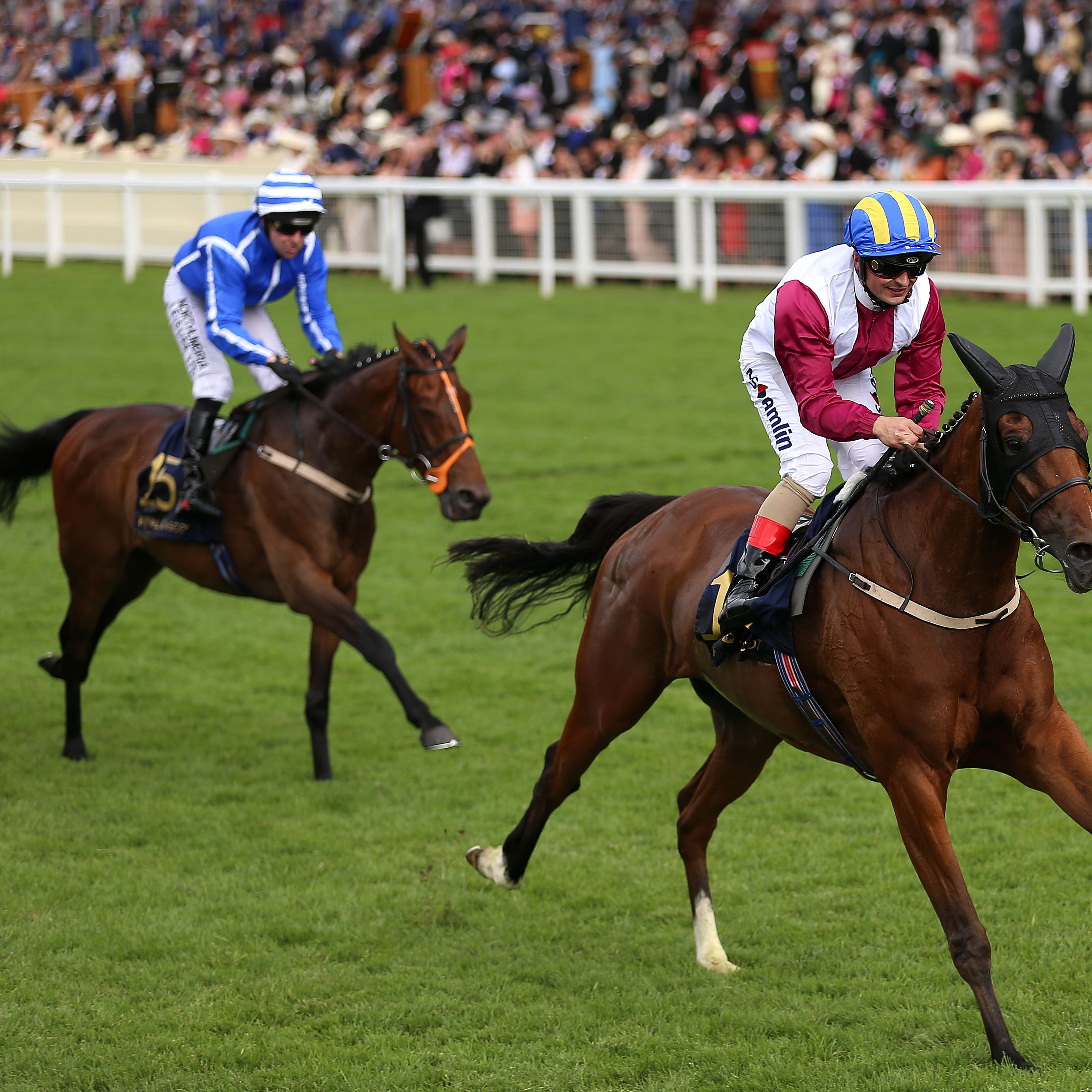 Stratum (in blue) finished behind stablemate Lagostovegas at Royal Ascot