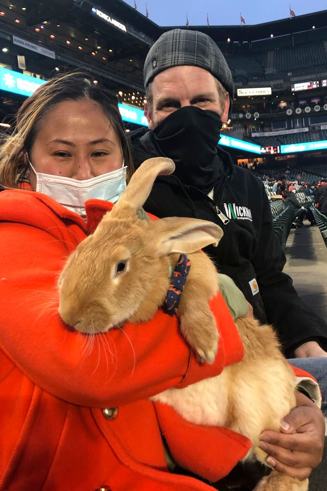 Kei Kato, left, and her fiance Josh Row hold a therapy rabbit named Alex during a baseball game between the San Francisco Giants and the Miami Marlins in San Francisco