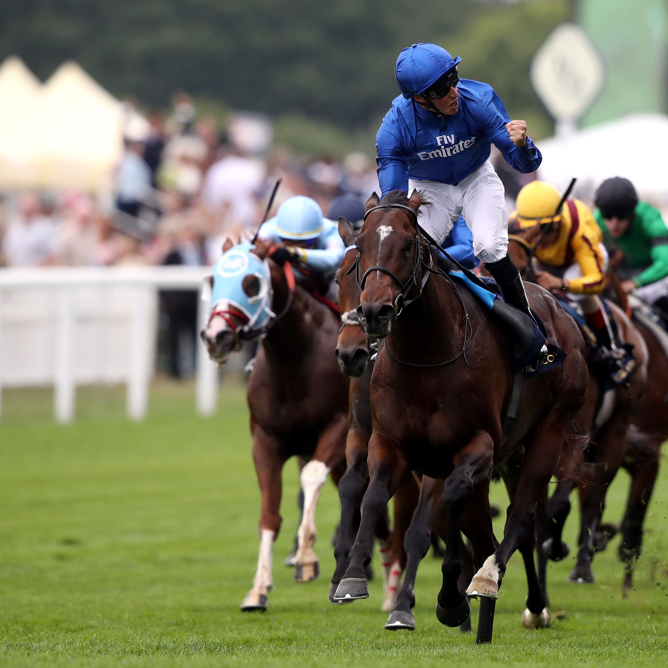 Blue Point who could tackle next month's Darley July Cup