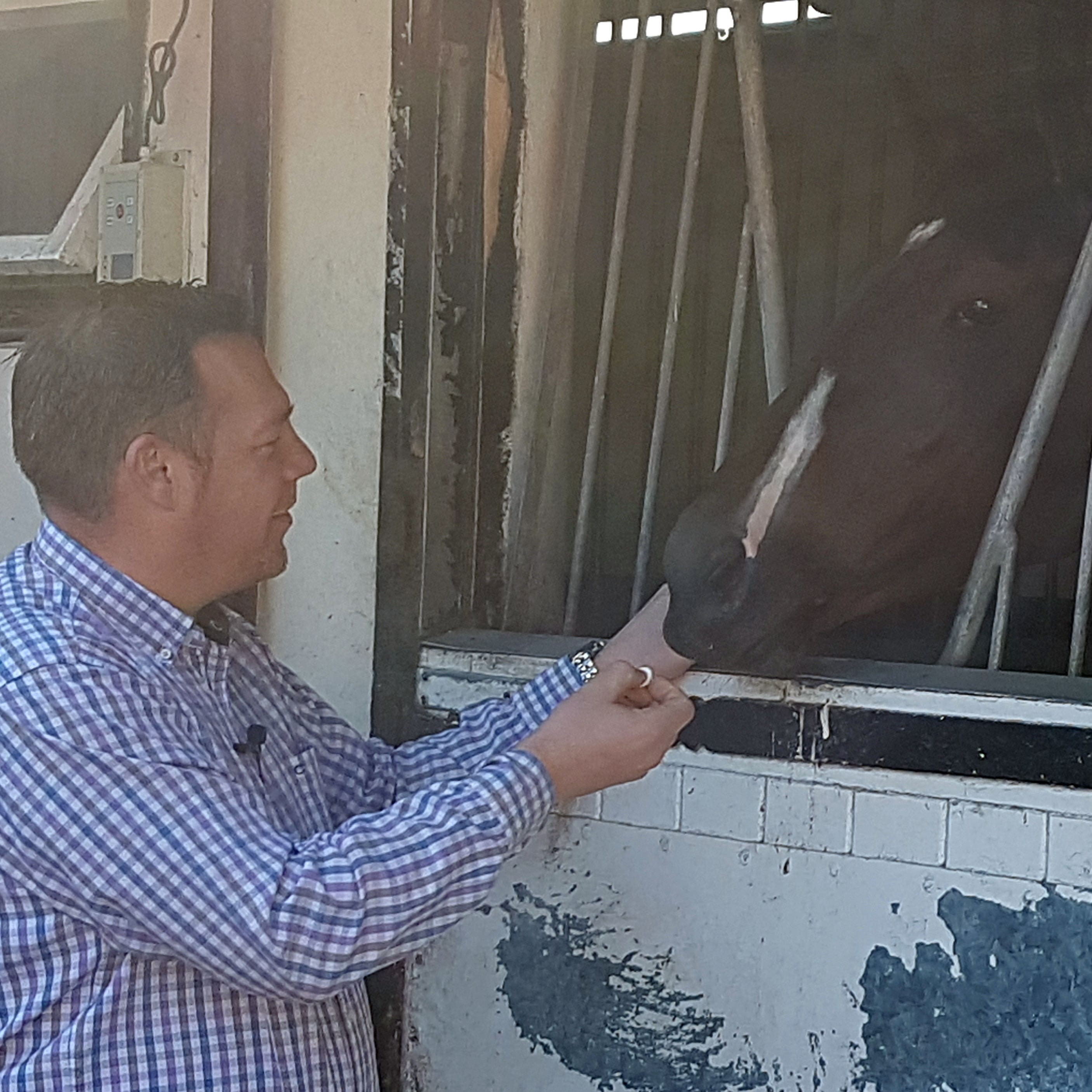 Owner John Dance gives Laurens a sweet in her box at Karl Burke's yard in Leyburn