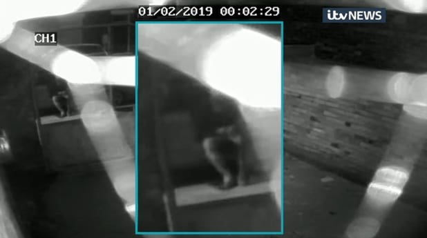 CCTV of a man sitting down minutes before missing student Libby Squire was last seen