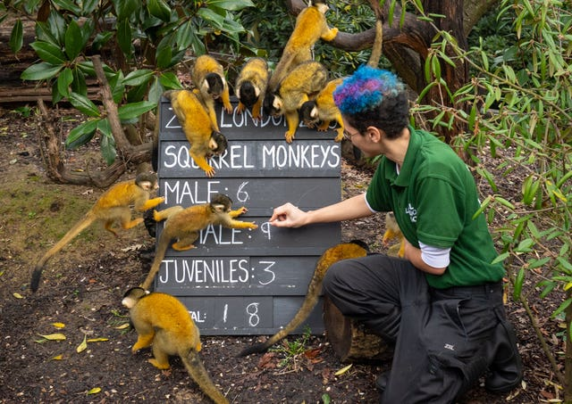Rowan Swainson counts Squirrel monkeys