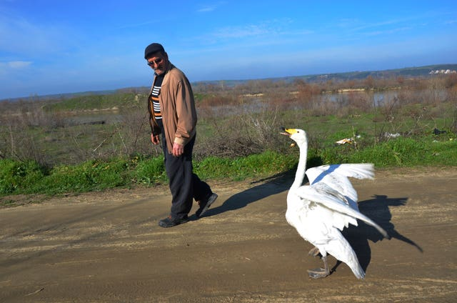 Recep Mirzan with Garip the swan