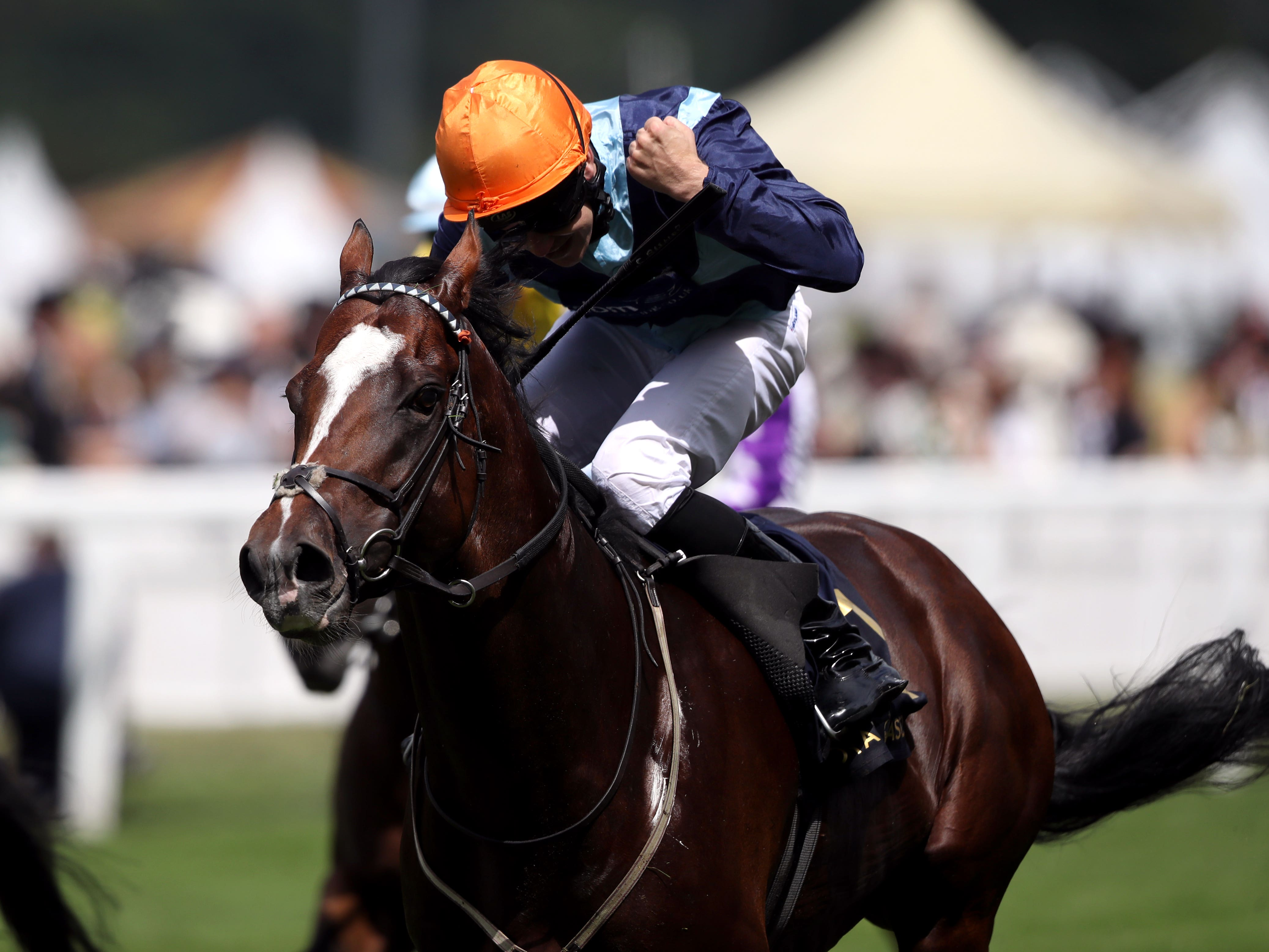 Accidental Agent will bid for a repeat win in the Queen Anne Stakes (John Walton/PA)