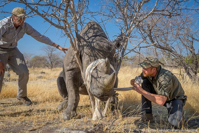 Prince Harry announced as Patron of Rhino Conservation Botswana