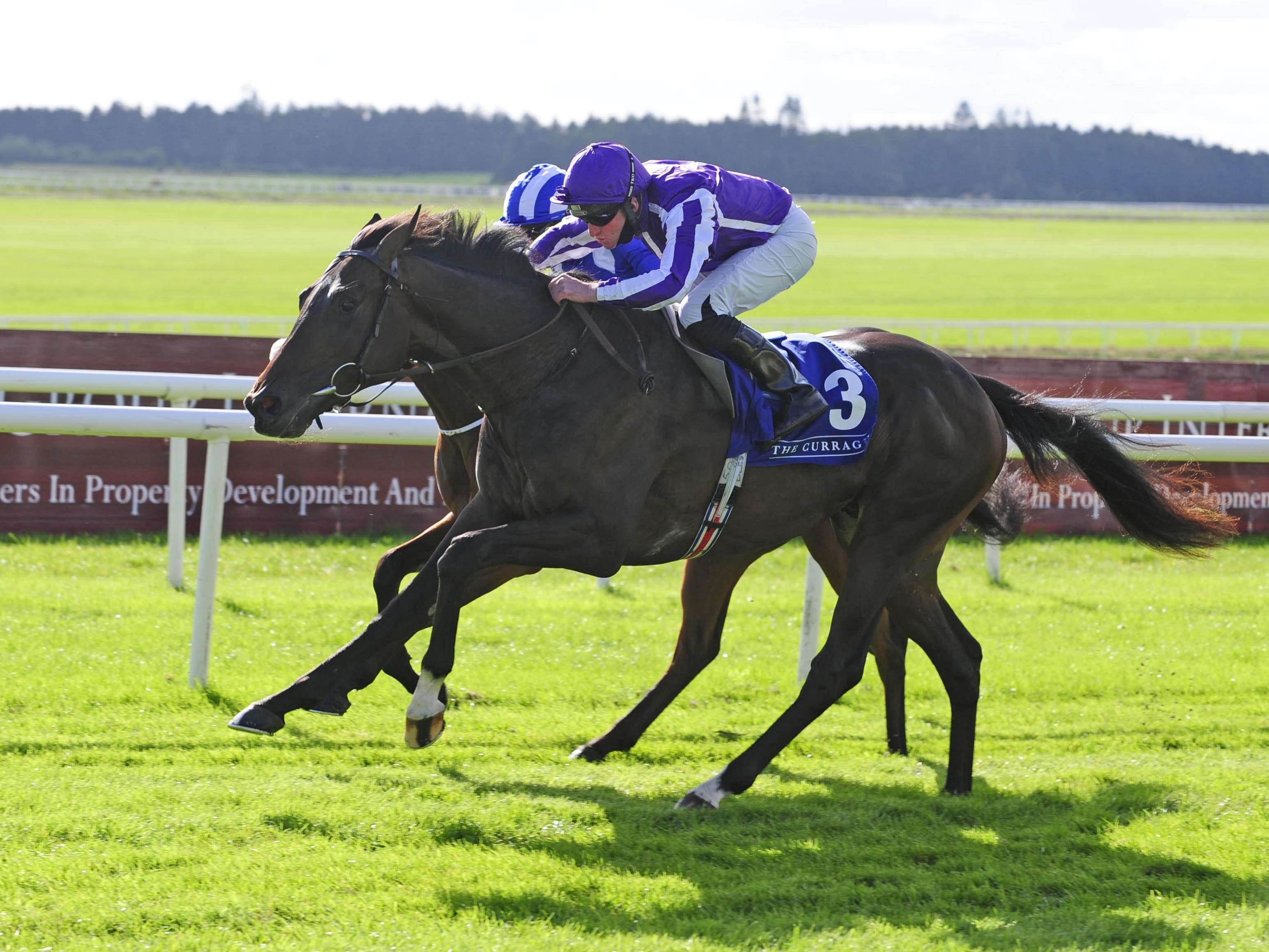 High Definition is one of five Aidan O'Brien possibles for the Novibet Derby Trial at Lingfield (PA)
