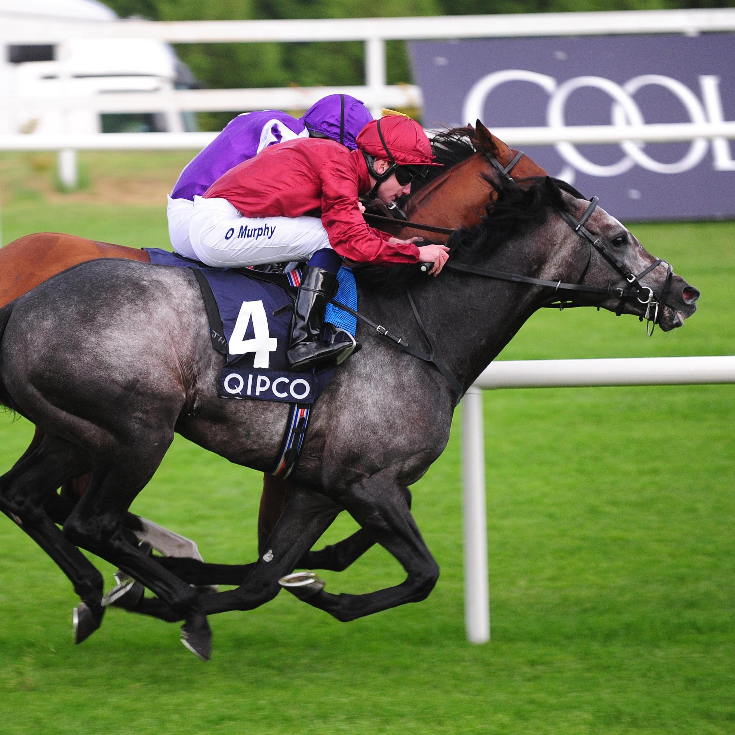 Roaring Lion grabs Saxon Warrior on the line to win the Irish Champion Stakes at Leopardstown