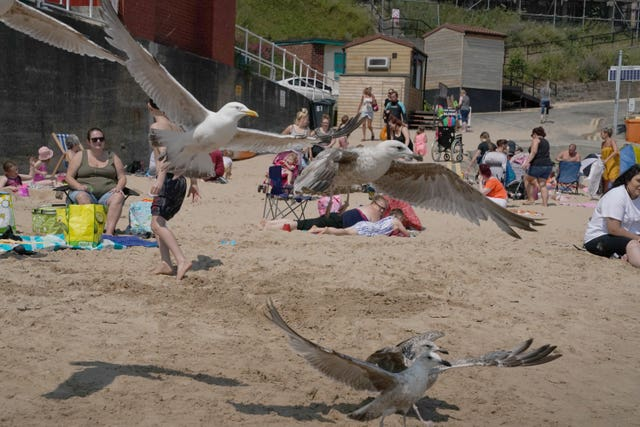 Seagulls fly around as people enjoy the hot weather in Cullercoats Bay, Tyne and Wear (Owen Humphreys/PA)