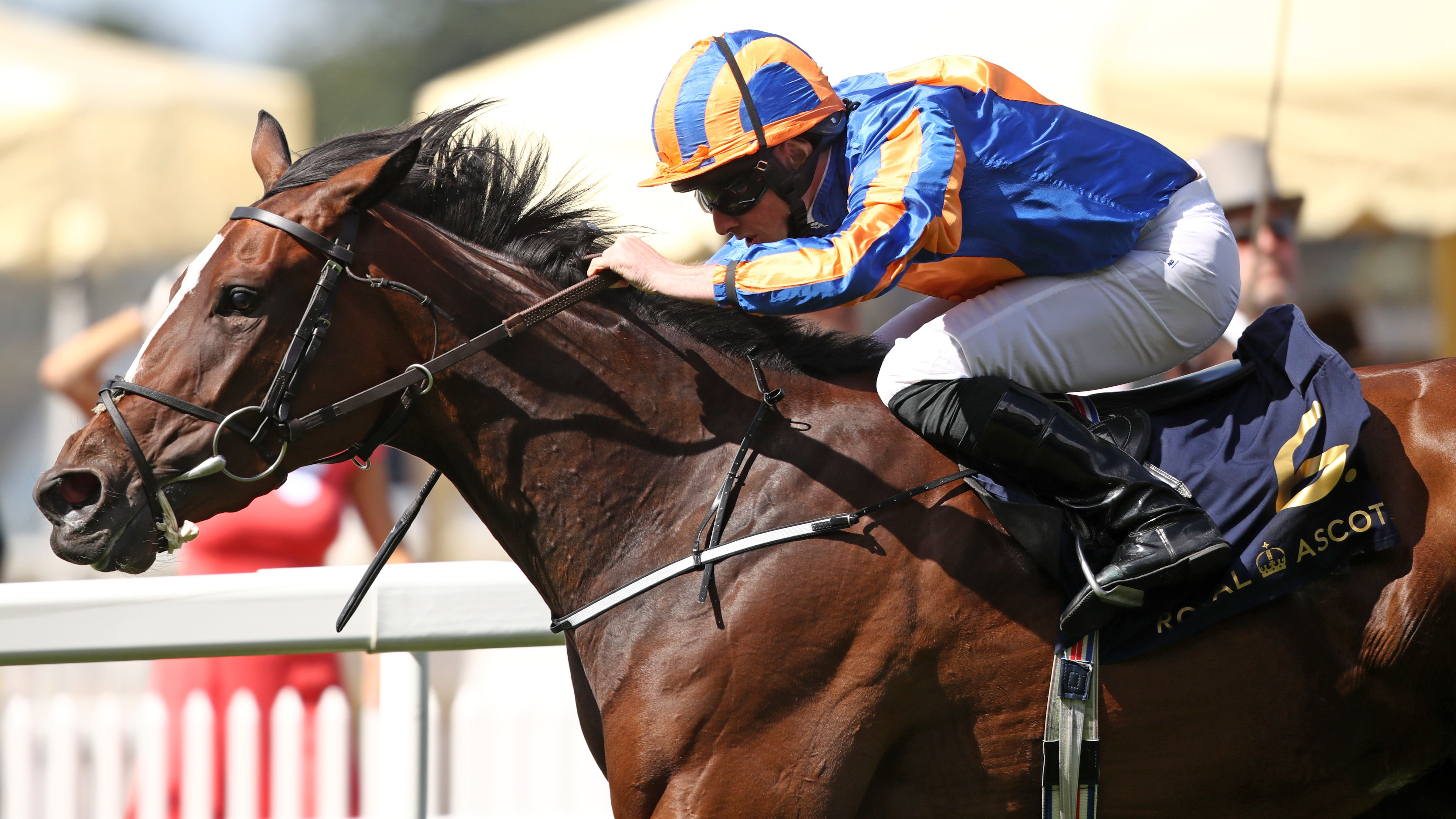 A punter's review of Dubai World Cup night |World Cup Night