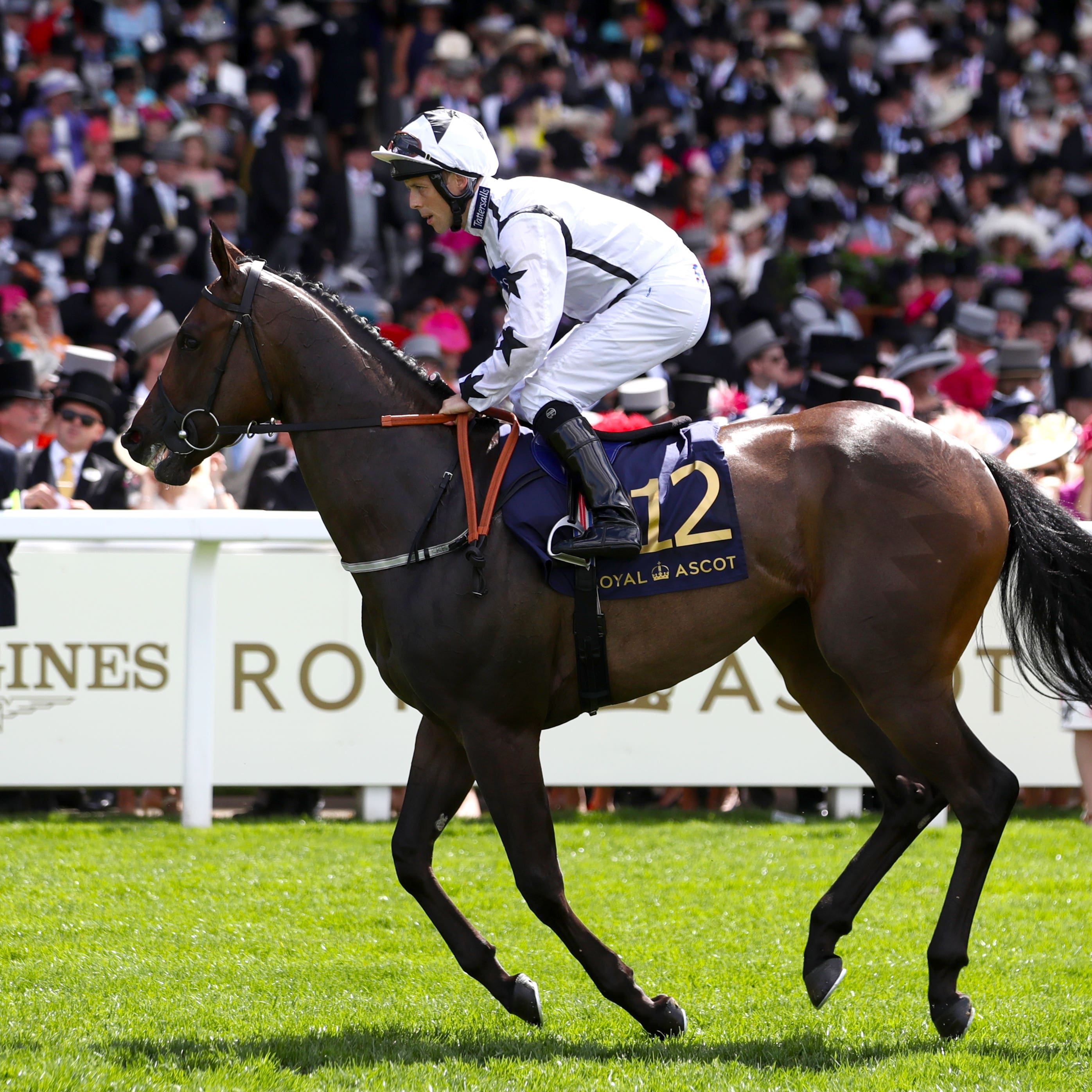 Little Kim goes to post for the Queen Mary at Royal Ascot