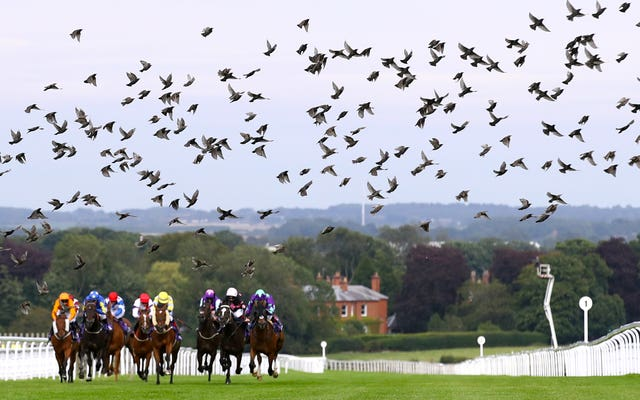 Birds fly across Beverley Racecourse in East Yorkshire. Phoenix Approach, ridden by jockey David Allan, left, went on to win the Pure Broadband Handicap race in August.