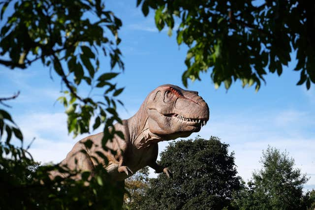The dinosaur family tree many have to be redrawn (Owen Humphreys/PA)