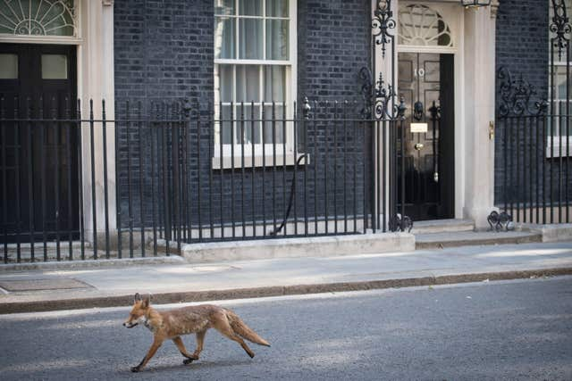 Fox in Downing Street