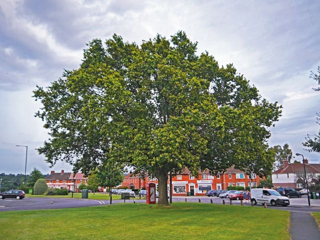 Tree of the Year contenders