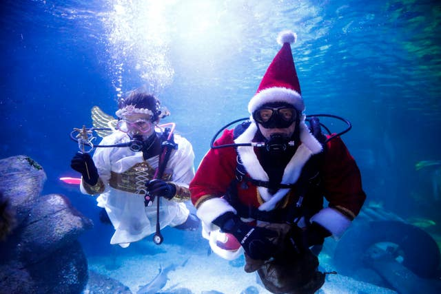Divers dressed as an angel and Santa Claus dive inside an aquarium to feed fishes during a media event at the Sea Life aquarium in Berlin, Germany